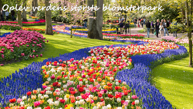 Holland i blomst