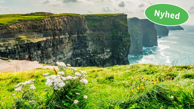 Irland i blomst