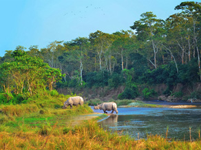 Chitwan National Park Nepal