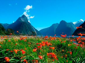 Blomster Milford Sound