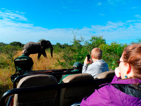 �bne safaribiler i Kr�ger National Park