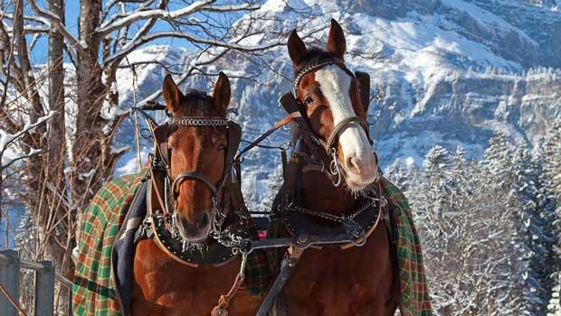 Alpejul i Tyrol