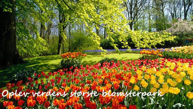 Skønne forårsdage i Sydholland