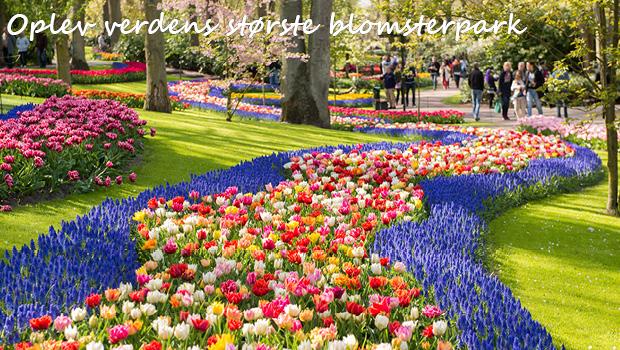 Holland i blomst