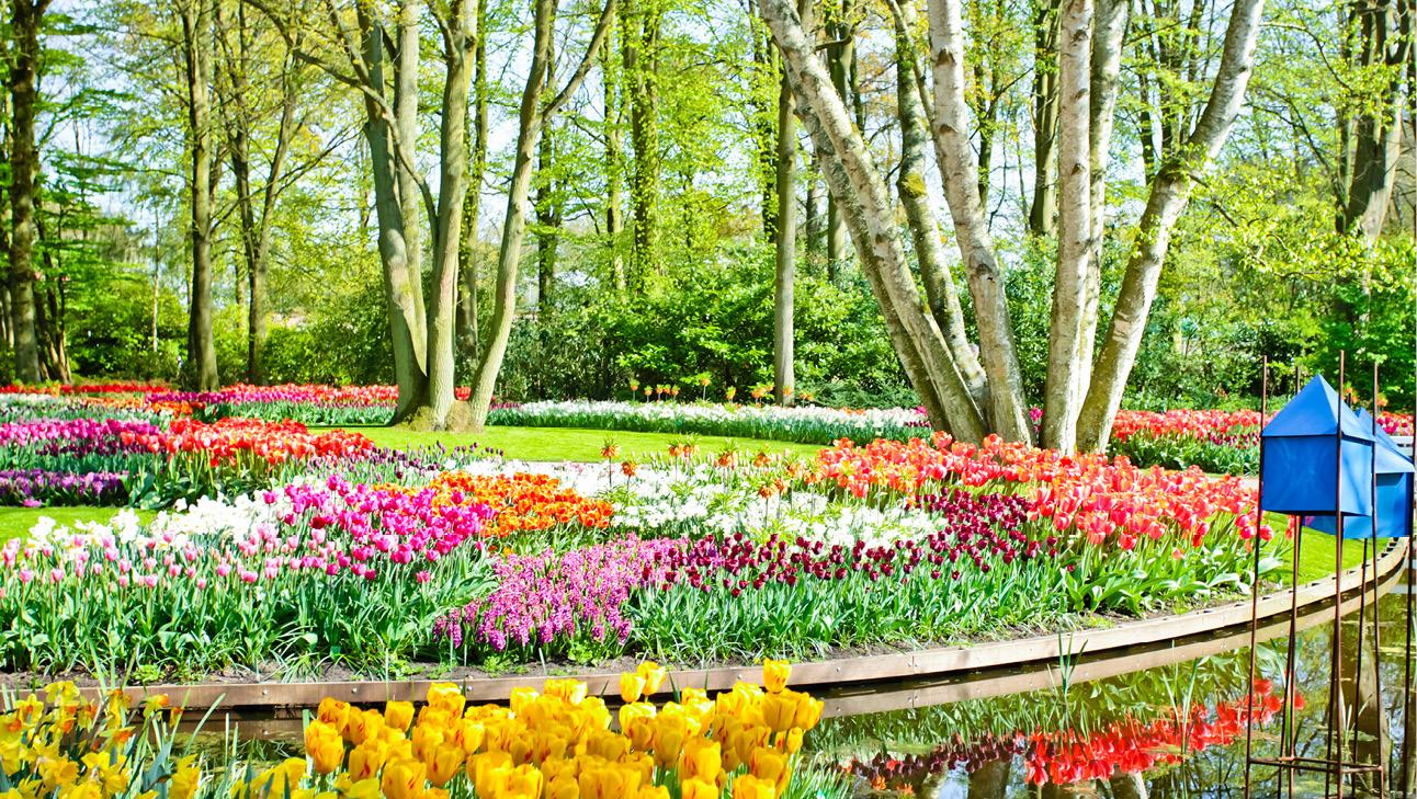 Blomsterrejser til Holland 2021