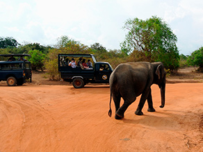 Yala National Park elefanter